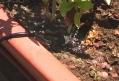 השקיה בטפטוף - סרטון הדרכה