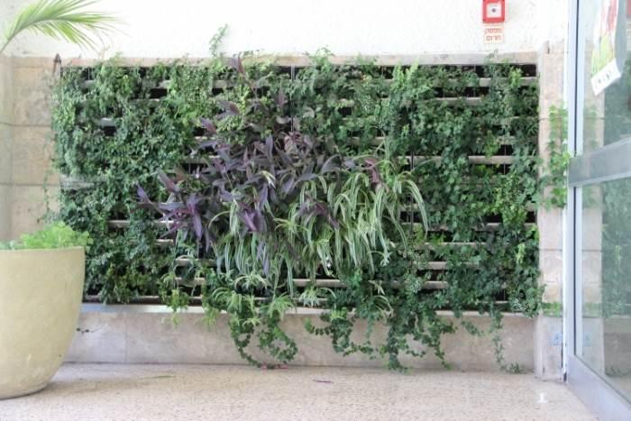 פתרון לשילוב צמחייה במרחב האורבני: קיר של גרין-אפ בכניסה לבית-ספר