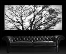 תמונת עץ ירוק - בלורן פתרונות פרזול ועיצוב לרהיטים