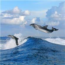 הדפסי זכוכית דולפינים