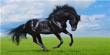 א.ר. שיווק - הדפס זכוכית סוס פרא
