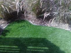 רויאל בייסיק - דשא עוז