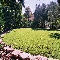 קלאסיק+ - דשא עוז