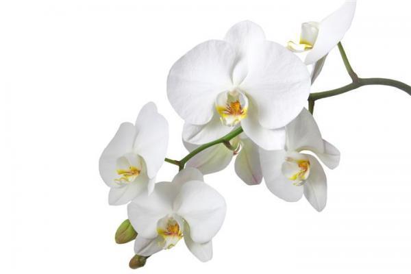 הדפס זכוכית פרחים - א.ר. שיווק