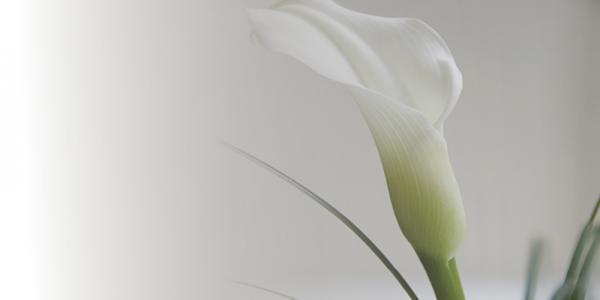 הדפס לזכוכית פרח לבן - א.ר. שיווק
