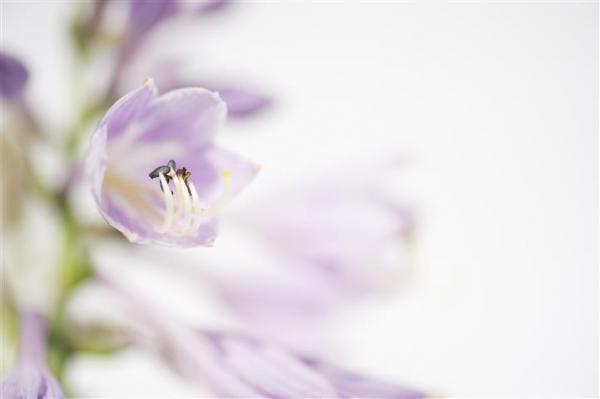 הדפס זכוכית פרח סגול - א.ר. שיווק