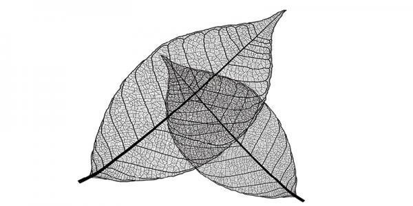 הדפסי זכוכית בדוגמת עלים - א.ר. שיווק