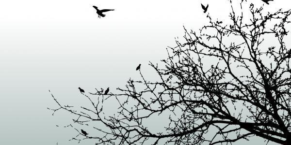 הדפס זכוכית ציפורים - א.ר. שיווק