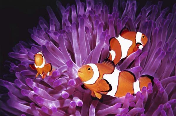 הדפס לזכוכית דגים - א.ר. שיווק