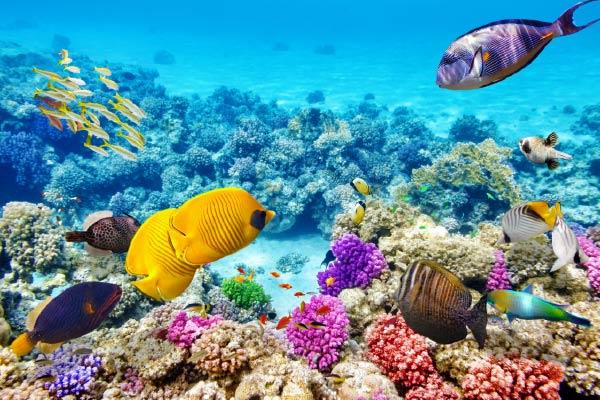 הדפס זכוכית אלמוגים - א.ר. שיווק