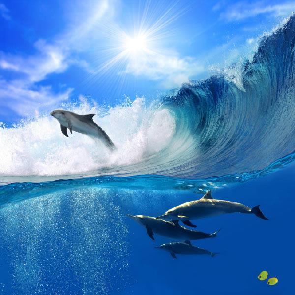 הדפסים לזכוכית דולפינים - א.ר. שיווק