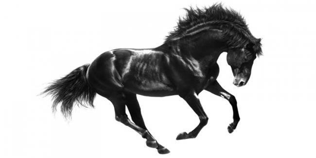 הדפס זכוכית סוס - א.ר. שיווק