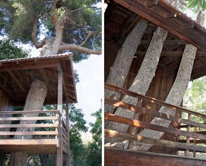 העצים נבדקו על ידי מומחה שבחן את קצב צמיחתו של העץ וכיוון גדילת הענפים שלו (צילום: גולני אדריכלים)