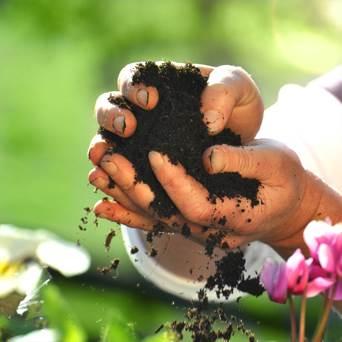חשוב לדשן ולא להזניח את אמא אדמה