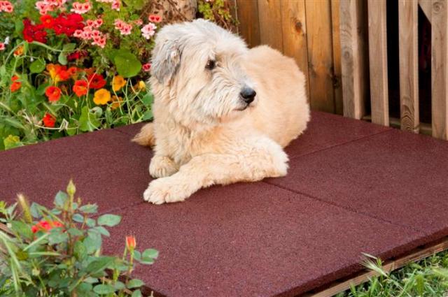 אפילו לכלב נוח - אריחי בטיחות מצמיגים ממוחזרים של חברת Tyrec. צילום: יח