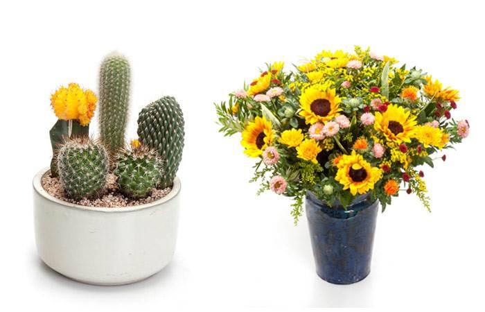 למי שמפחד מצהוב, אפשר להכניס את הצבע בפרחים. גם צבעוני וגם מריח. זר פרחים ניחוח מדבר ועציץ קקטוס. צילום: דן לב. להשיג ב ZER4U.