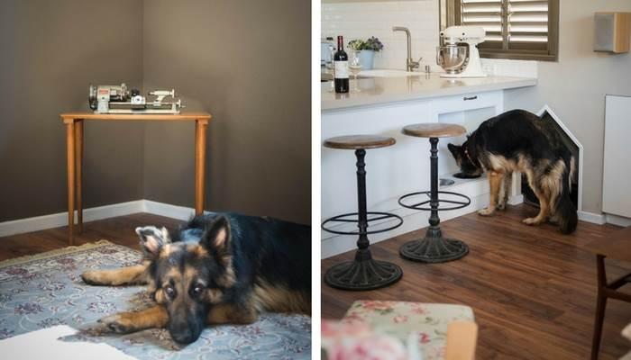 התחשבות בבעלי חיים בעיצוב פינות מיוחדות<br/>צילום: עומרי אמסלם