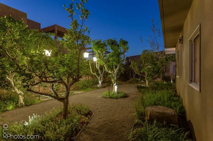 בעונת האביב מומלץ לטפל גם בענפי הבסיס של העצים והשיחים ירוקי העד על ידי גיזום שירענן את הענפים | קרדיט לתמונה: רפאל וייצמן, עיצוב נוף