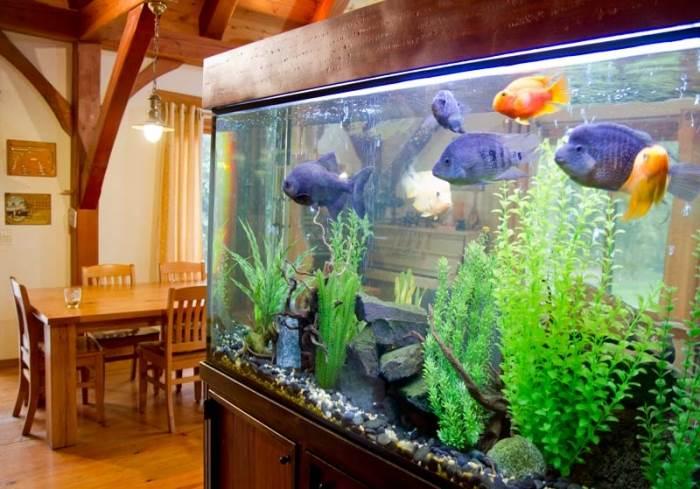 אקוואריום של דגים טורפים חוצץ בין החללים. מתחתיו ארון אחסון נעליים מעץ (צילום: יניב ברמן, xnet)