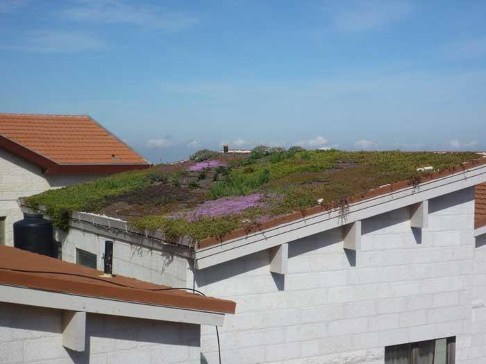 גינה מקסימה על גג מסייעת גם בבידוד תרמי