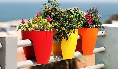 לא מסתפקים באדניות חד-גוניות: העציצים הצבעוניים של גרינבו