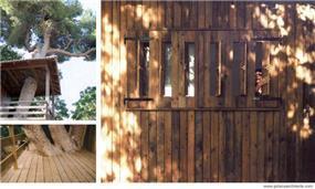 תריס עץ ודק עץ - במבנה מעץ בין עצי אורן ותיקים