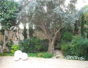 אזור בגינה הכולל עץ זית - מאיה שפיר עיצוב פנים  - MS
