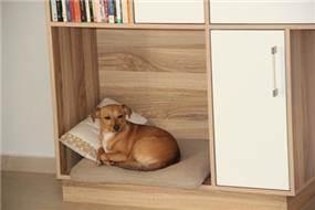 ספריה עם אזור אישי לכלב, סיגלית פרץ אדריכלות ועיצוב פנים