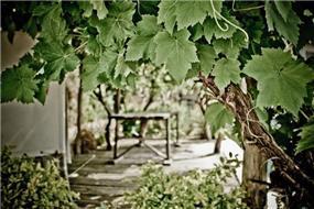 גינה בקיסריה בעיצוב גני עמרם