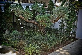 חצר בהרצליה פיתוח בעיצוב גני עמרם