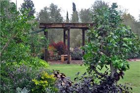 מבט מהגינה לפרגולה, מירי גור אדריכלות ועיצוב פנים