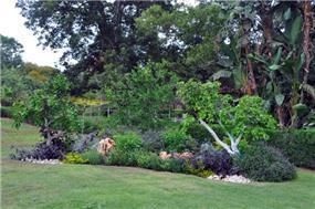 מבט לגינה,מירי גור
