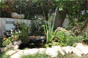 בירכת דגים בחצר האחורית בבית בהוד השרון, מיטל צימבר