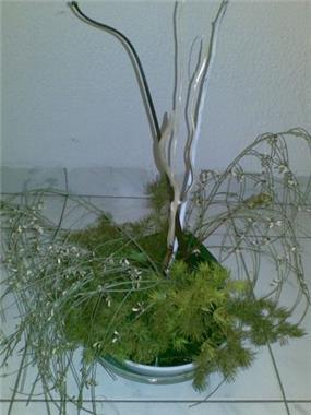 צמח דקורטיבי - יהודית גל