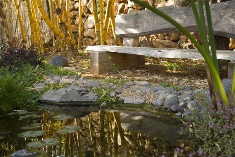 בריכת דגים - מורן גבעון - עיצוב גנים בנוף