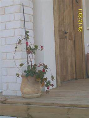 שילוב בין חומרים בחזית הבית. עיצוב של רוית קשטן-ארצי