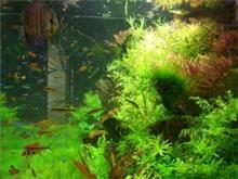 אקווריום צמחיה 2
