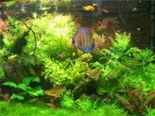 אקווריום צמחיה 1