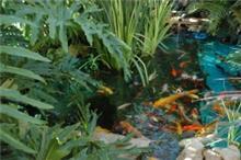 בריכת דגי קוי נתניה 1