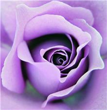 דקור ורד - חלמיש