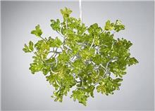 מנורה ירוקה - יהודה אוזן