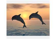 טפט דולפינים