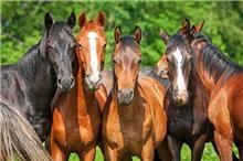 הדפסי זכוכית סוסים