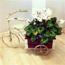 אדנית אופניים לעציץ