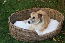 סלסלה מראטן טבעי לכלב דגם שיר