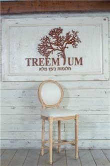 כסא עץ טבעי - Treemium - חלומות בעץ מלא