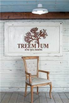 כסא עץ מרשים - Treemium - חלומות בעץ מלא