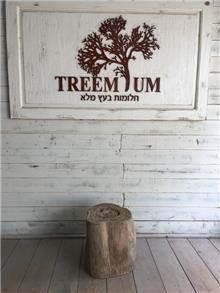 שולחן בול עץ - Treemium - חלומות בעץ מלא