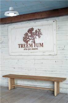 ספסל ייחודי מעץ גזע דגם 2164 - Treemium - חלומות בעץ מלא