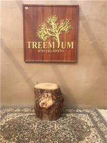 בול עץ זית - Treemium - חלומות בעץ מלא